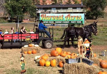 Lil Harvester's Pumpkin Patch