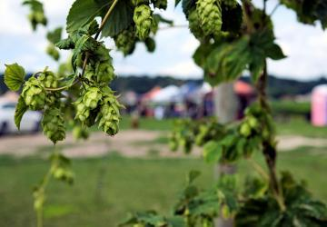 6th Meridian Hop Farm