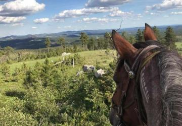 Bridle Ridge Horse and RV Camp