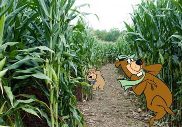 Corn Maze at Yogi Bear's Jellystone Park