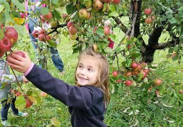 Country Apple Orchard