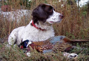 Meadow Creek Pheasant Camp