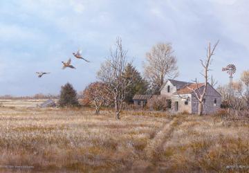 Faulkton Pheasant Camp